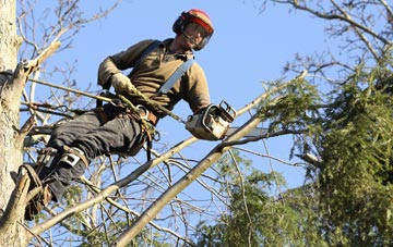 hiring experienced Hertfordshire tree surgeons