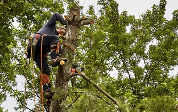 tree surgeon Hertfordshire