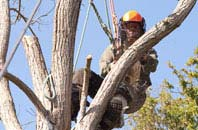 Hertfordshire tree surgeon services