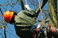 free Hertfordshire tree surgeon quotes